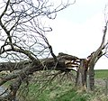 Storm damage - geograph.org.uk - 1094224.jpg