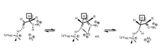 Xylose isomerase - mechanism of xylose isomerization