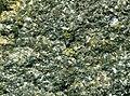 Sulfidic anorthosite (platinum-palladium ore) (Johns-Manville Reef, Stillwater Complex, Neoarchean, 2.71 Ga; Stillwater Mine, Beartooth Mountains, Montana, USA) (14645417507).jpg