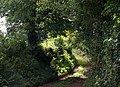 Summer Cleave Lane - geograph.org.uk - 1520999.jpg