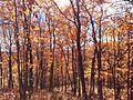 Superior hiking trail, Duluth, MN- 2014-04-17 22-56.jpg