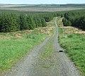 Sustrans Route 68 Wark Forest - geograph.org.uk - 1362374.jpg