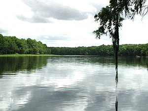 Old Folks at Home - The Suwannee River in Florida