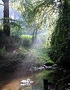 Swan in Sunshine - Tierpark Olderdissen.jpg