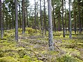 Tentsmuir Forest - geograph.org.uk - 1450102.jpg