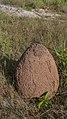 Termite hill (33153944670).jpg
