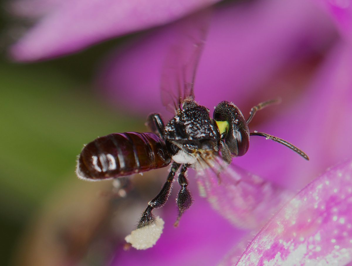 Dating rituals north american wasp