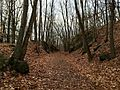 The Larkin Trail in Whittemore Glen State Park in Naugatuck Connecticut.jpg