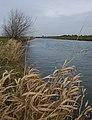 The River Hull near Tickton - geograph.org.uk - 1194188.jpg