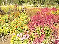 The TNU Botanical Garden in Simferopol, Crimea, Ukraine 10.JPG