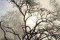 The black tree.jpg