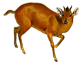 The book of antelopes (1894) Cephalophus natalensis white background.png