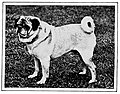 The new book of the dog; a comprehensive natural history of British dogs and their foreign relatives, with chapters on law, breeding, kennel management, and veterinary treatment (1907) (20614238180).jpg
