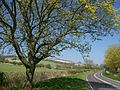 The road into Upwaltham.JPG