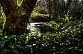 Tintern stream - panoramio (2).jpg