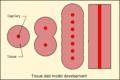 Tissue slab model.png