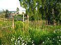 Tomsky District, Tomsk Oblast, Russia - panoramio - Figure (6).jpg