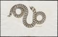 Tortrix scytale - 1700-1880 - Print - Iconographia Zoologica - Special Collections University of Amsterdam - UBA01 IZ11400043.tif