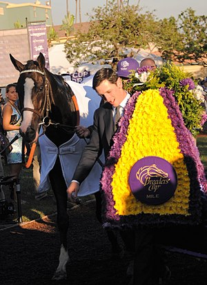 Tourist (horse) - Tourist after winning the 2016 Breeders' Cup Mile