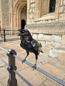 Tower of London Raven.jpg