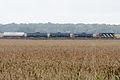 Train in corn field (15320086036).jpg