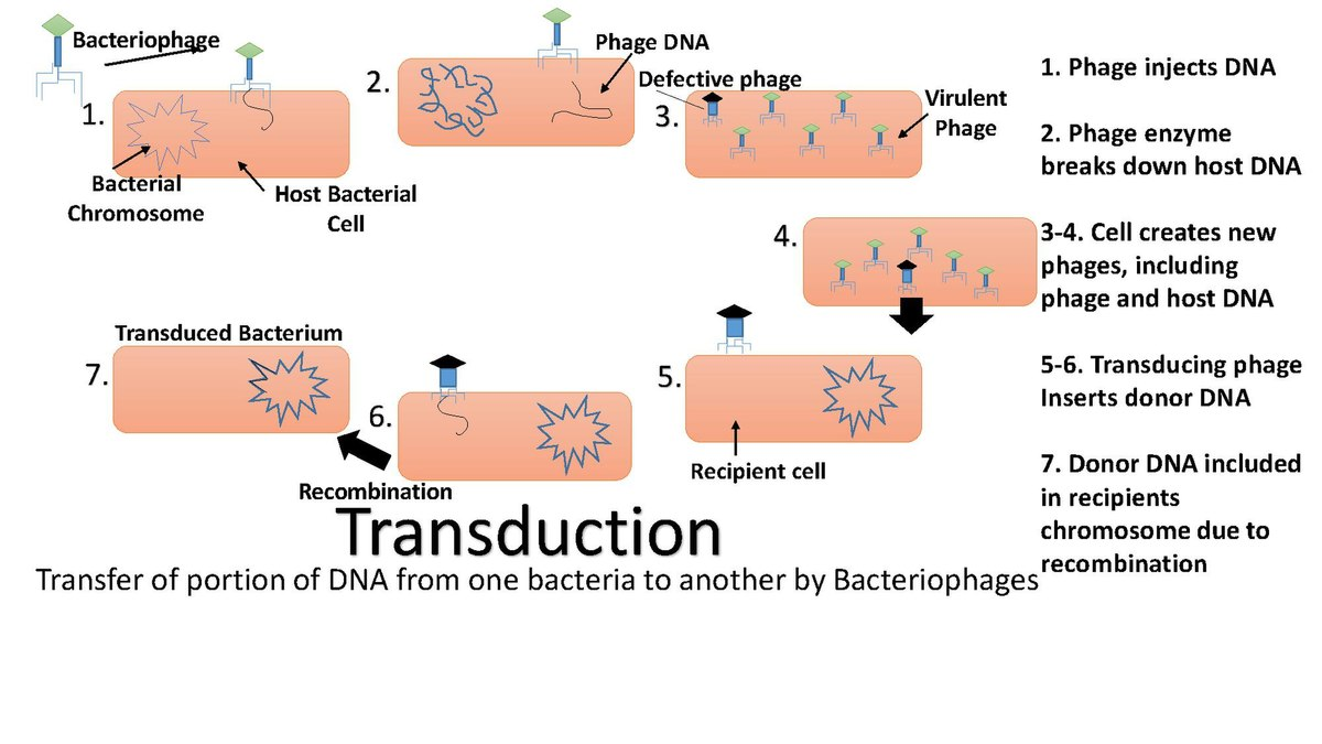 Transduction Genetics Wikipedia Process Flow Diagram