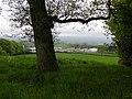 Tree, Ballymacilroy - geograph.org.uk - 1869068.jpg