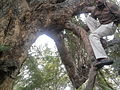 Tree climbing YVSREDDY (2).jpg