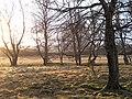 Trees, Insharn - geograph.org.uk - 663729.jpg