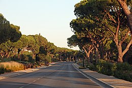 Trees along the way to the San Lorenzo Golf Course (36487142654).jpg
