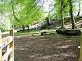 Trees and fallen trees - geograph.org.uk - 464928.jpg