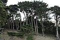 Trees at Point Reyes (TK3).JPG