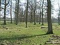 Trees in early spring sun nr Keld farm - geograph.org.uk - 441943.jpg