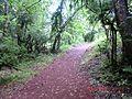 Trekking en Huilo Huilo - panoramio.jpg