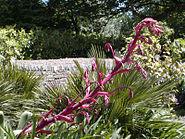 Trelissick yucca blossom