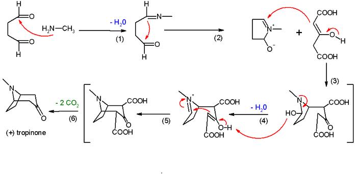 Tropinon Synthese