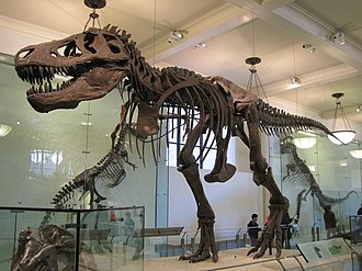 Stephen Jay Gould - Gould said he was inspired to become a paleontologist by T. rex specimen AMNH 5027 in the American Museum of Natural History.