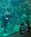 US Navy 110124-N-6778P-013 Navy Diver 2nd Class Brad Pask, interacts with the audience during a show at the Florida Aquarium.jpg