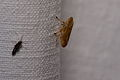 Unbekanntes Insekt 3217.jpg