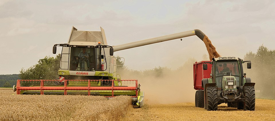 Harvesting wheat with a combine harvester accompanied by a tractor and trailer Unload wheat by the combine Claas Lexion 584.jpg