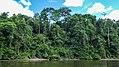 Upper-Suriname river (33537812295).jpg
