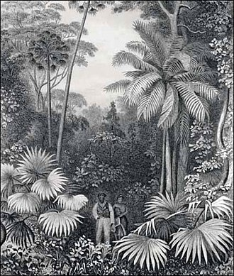 "United States Botanic Garden - United States Exploring Expedition, 1838–1842 - Engraving from ""Narrative of the United States Exploring Expedition"" - Forest Illiwara, New South Wales"