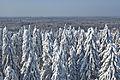 Vaade Suure Munamäe vaatetornist 2013 02.jpg