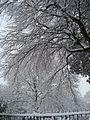Victoria Park, Cardiff CF5, UK - panoramio.jpg