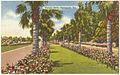 Victory Drive, Savannah, Ga. (8368128610).jpg
