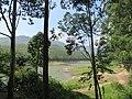 Views around Munnar, Kerala (72).jpg