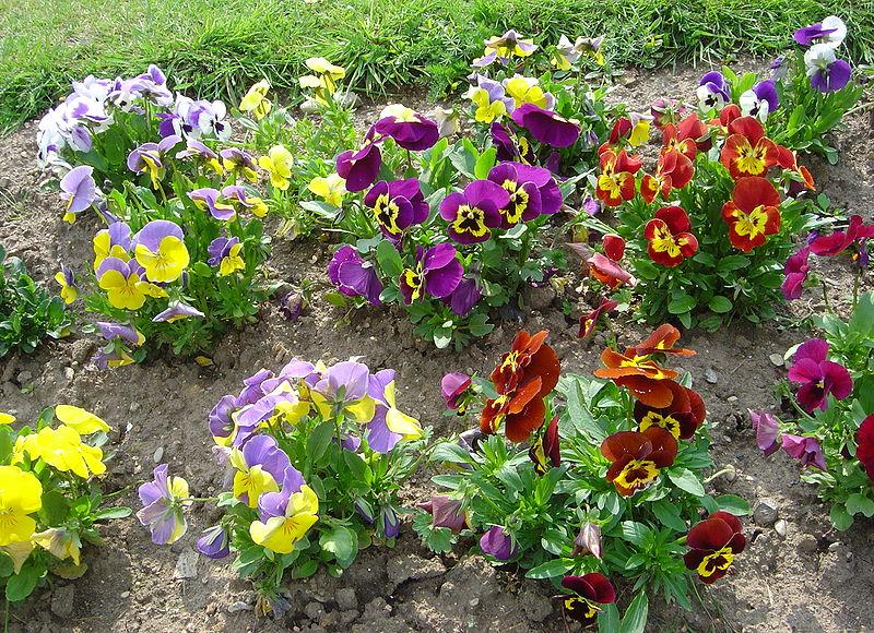 Jak zaprojektowa ogr d przydomowy for Produccion de plantas ornamentales