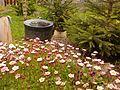 Virágos - panoramio.jpg