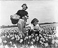 Voorjaarsplaatjes meisjes op Narcissenveld, Bestanddeelnr 905-6422.jpg