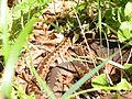 Vretenica - panoramio.jpg